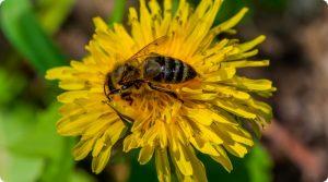 Saiba porque as abelhas estão morrendo.